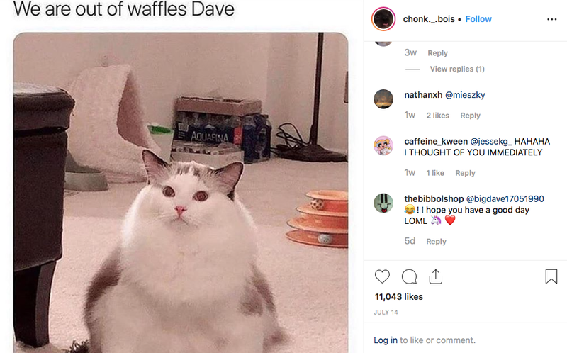 Chonk refers to a fat cat