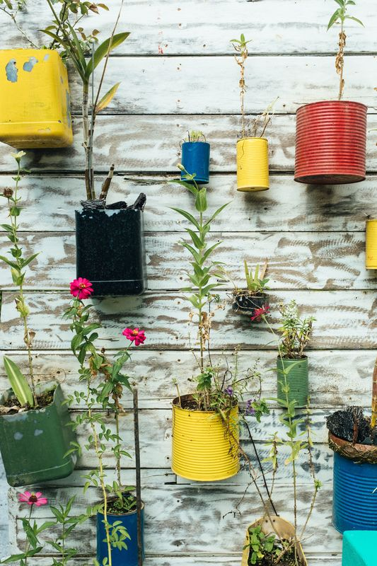 Reuse materials like tins by turning them into pot plants