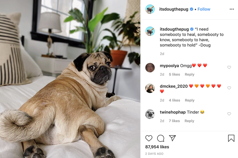 Follow Doug the Pug on Instagram
