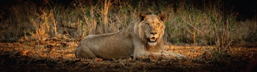 Rediscover the Kruger with a new app